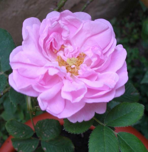 post-1677-0-48380300-1343397155_thumb.jp
