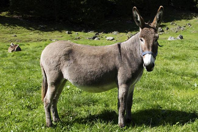 asino-donkey-asnun.jpg