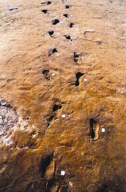 Impronte umane su tufo vulcanico risalenti a circa il 2000 a.C..jpg