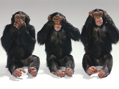 scimmia2.jpg