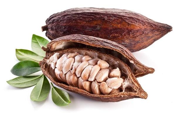 seme di cacao.jpg