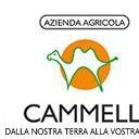 Danielecammelli