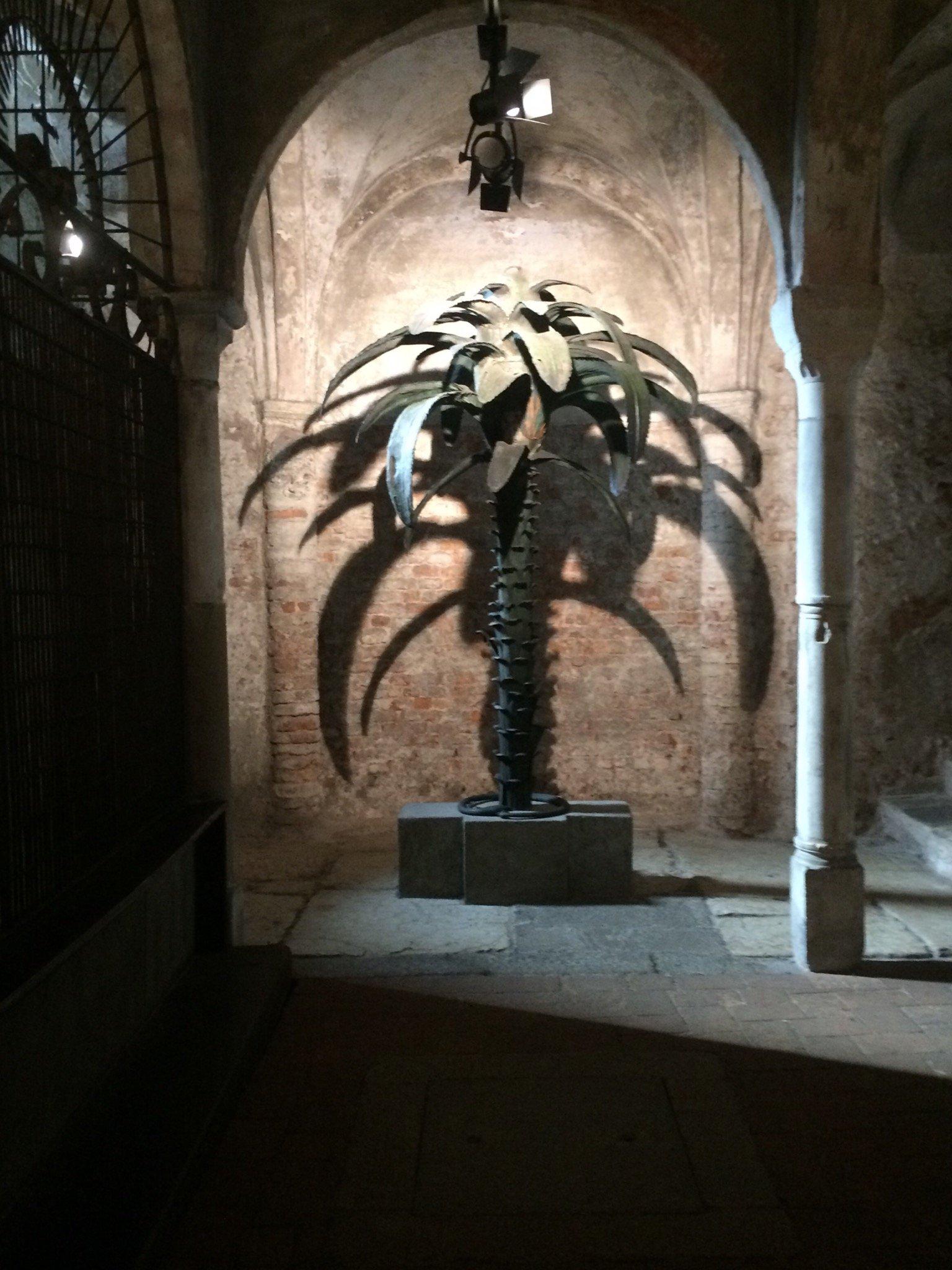 Il ritorno della palma, simbolo di Milano e dell'Ambrosiana