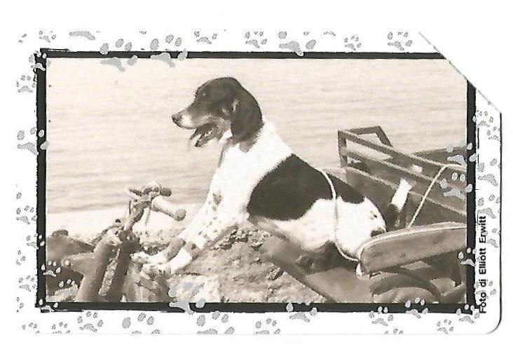 102.al verso Amicizia per i cani.jpg