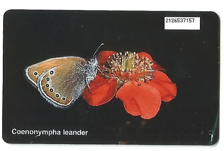 024.un'altra farfalla al verso.jpg