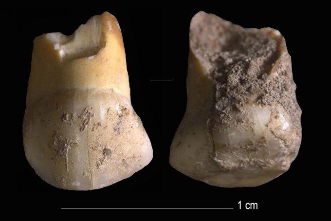 dente-da-latte-Neandertal.jpg