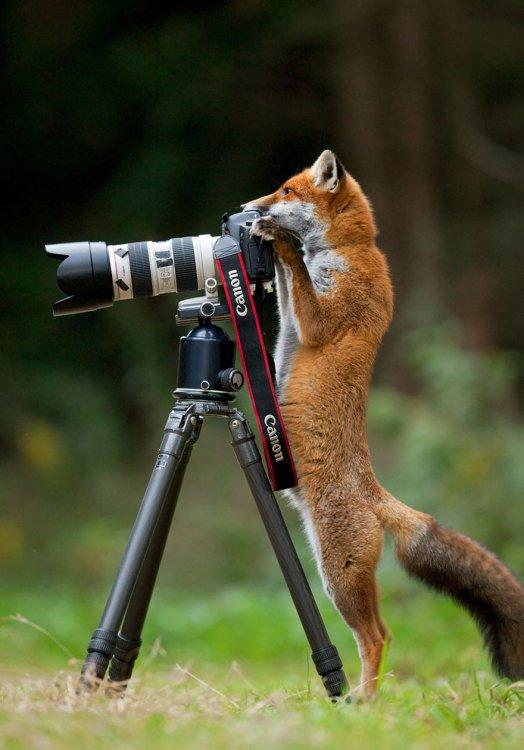 animali-con-macchina-fotografica-aiutano-fotografi-07.jpg