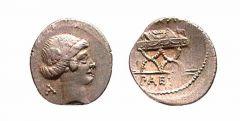 Caius Considius Paetus